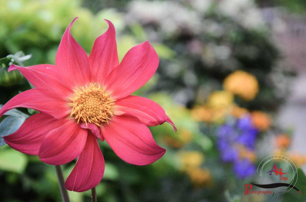Dimmed Flower by Ali Zayn