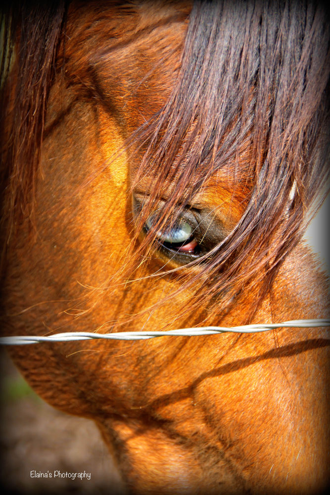 horse eye by Elaina24