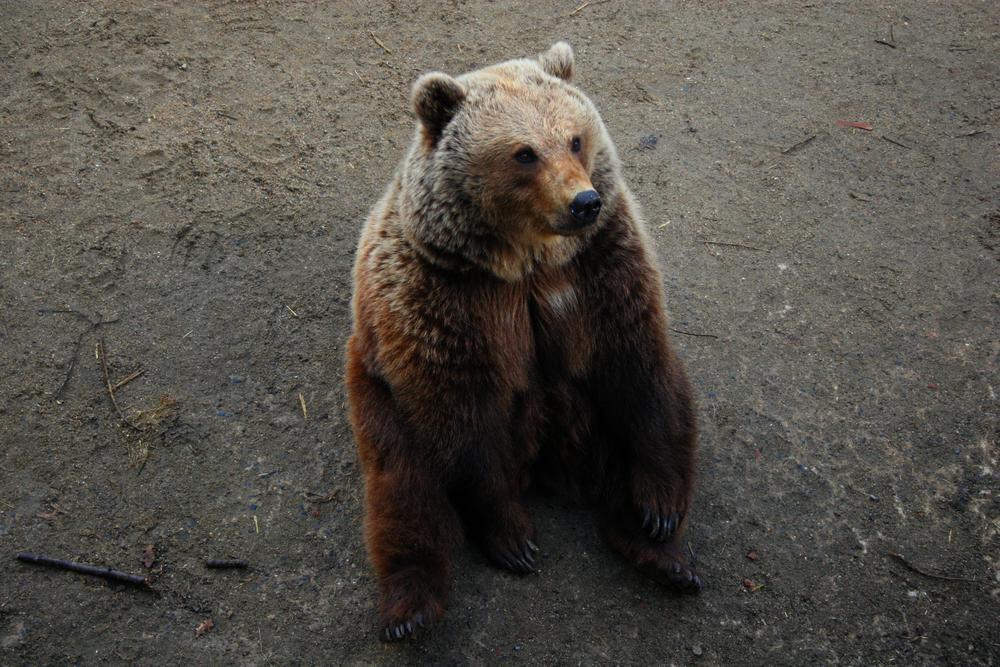 Photo in Animal #zoo de la boissière du doré
