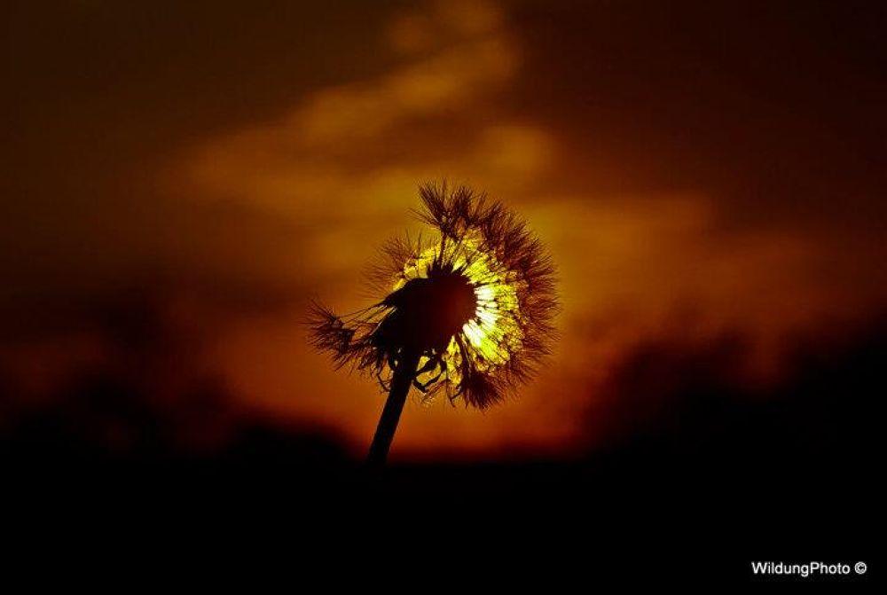 sunshine by Wildung