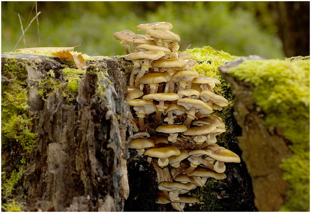 mushroms in the Wicklow mnt. by mik70