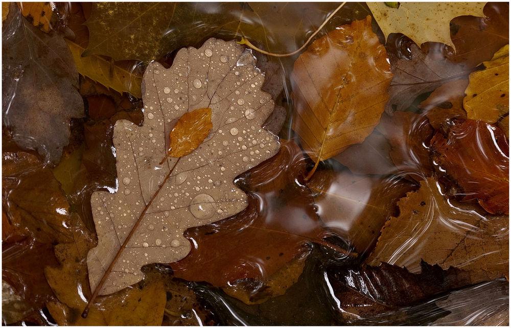 autumn leaf by mik70