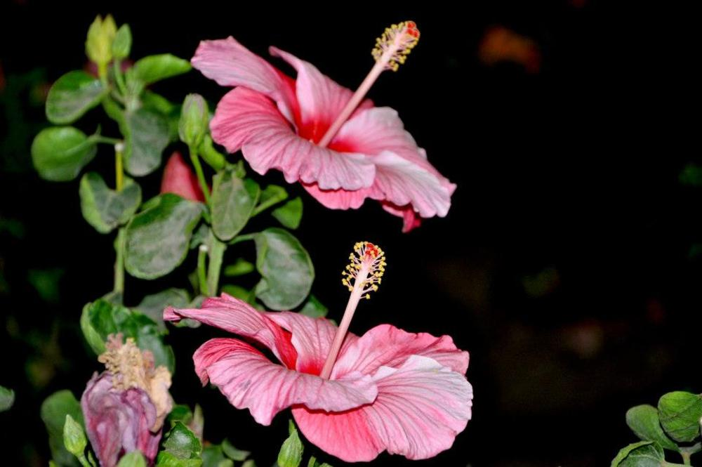 Jasud Flowers by VS. Photograpy