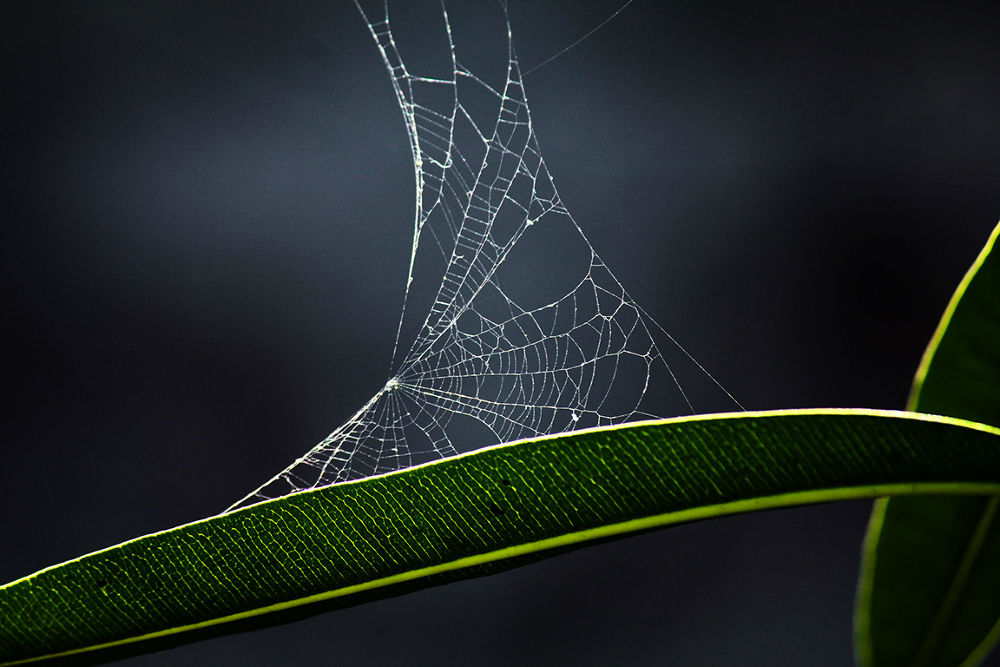 Spider Web by susilshah