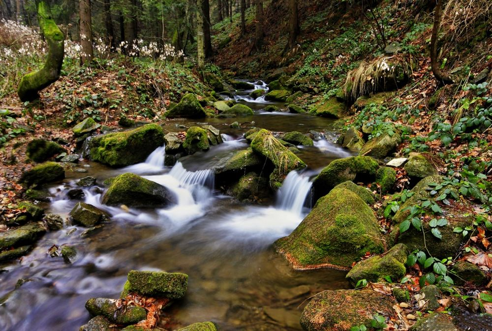 mountain river by Stenly Priesol