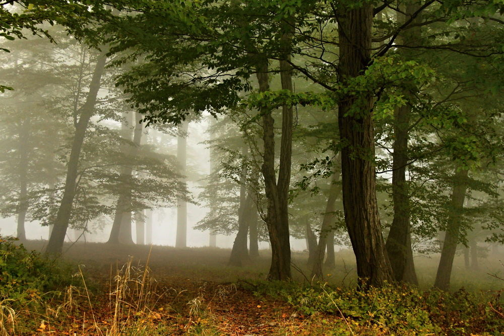 Forrest mist by Stenly Priesol