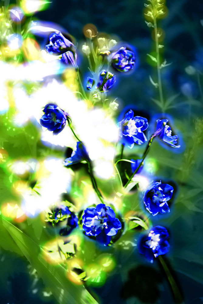 Blue by Juan Bautista