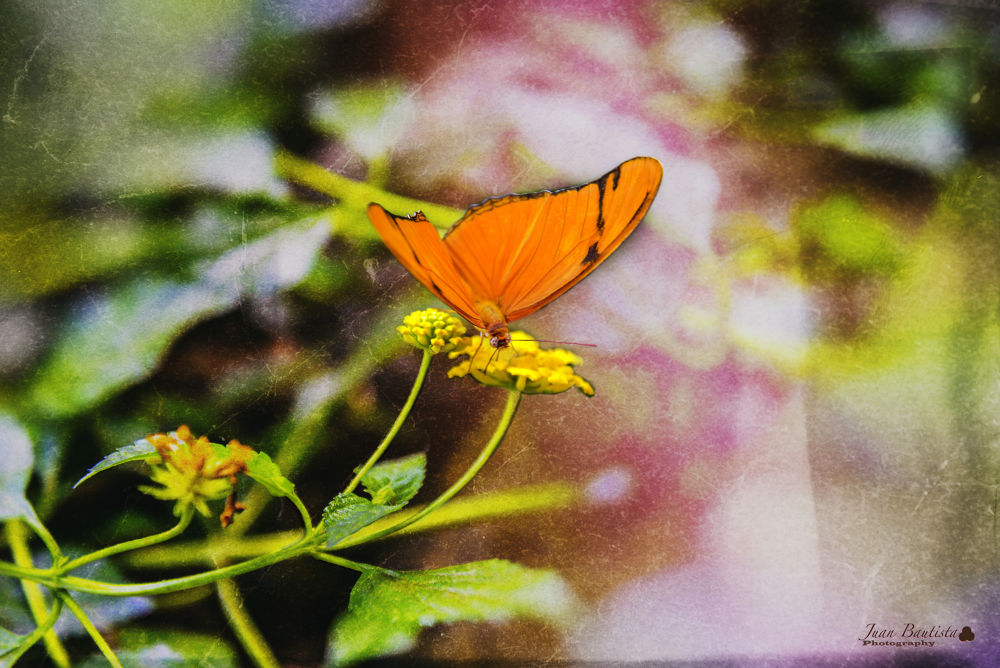 Glowing fly by Juan Bautista