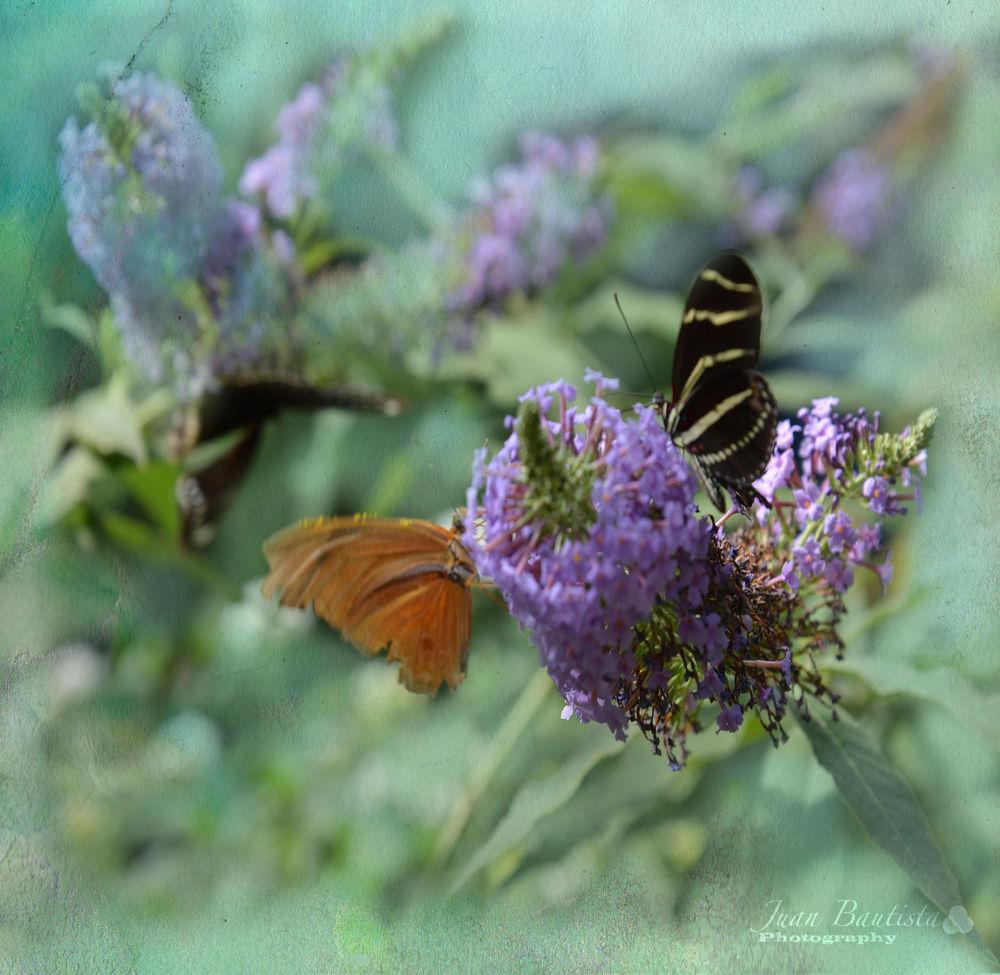 Paperflys by Juan Bautista