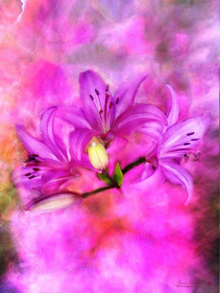 Pink buque by Juan Bautista