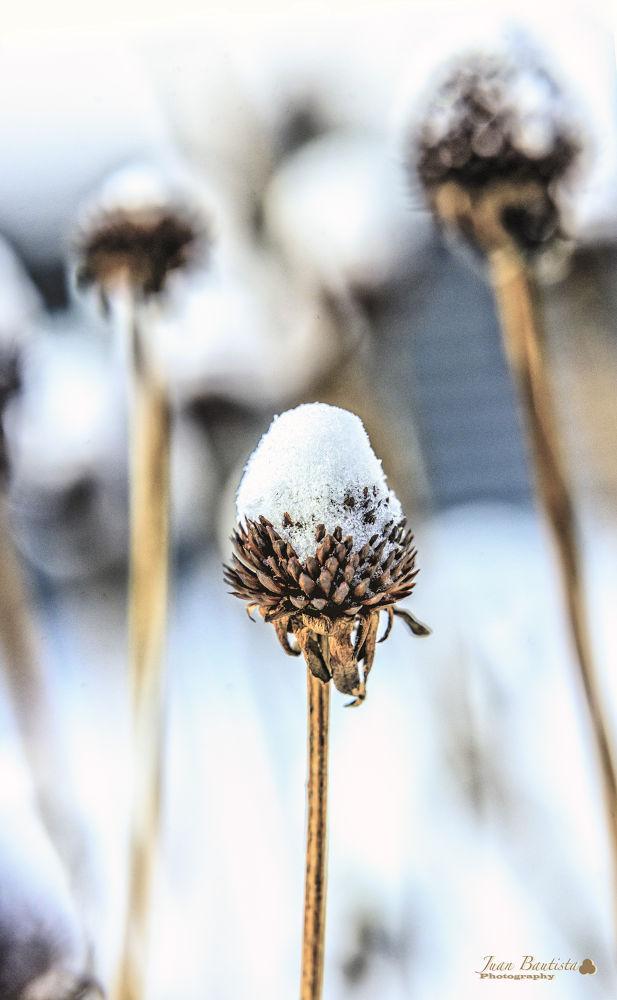 frozen by Juan Bautista