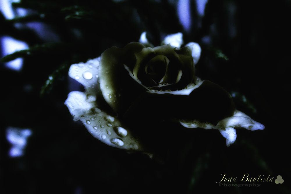 Night light by Juan Bautista