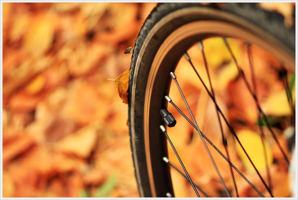 Photo in Nature #lüleburgaz #gençlik parkı #bisiklet #sonbahar