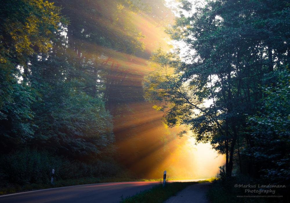 Natural spotlight by MarkusLandsmann