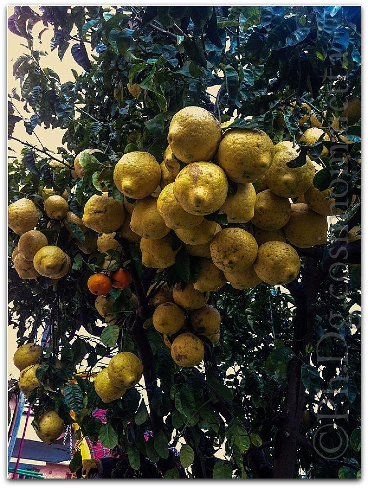 limonsud - napoli - italy by Ph.Dg.Mi. cosimo maietta