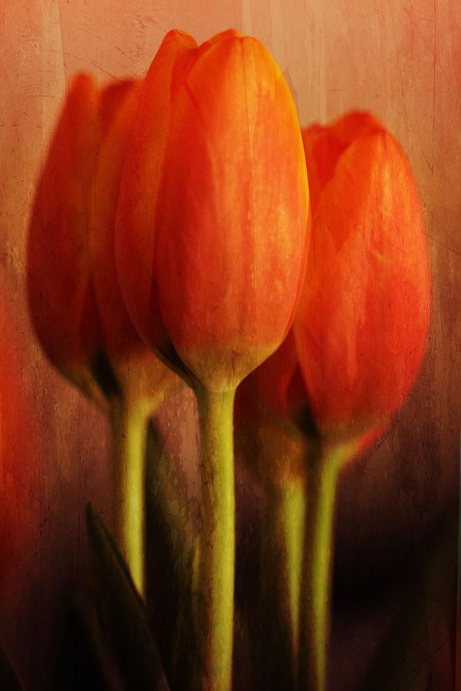 fire Tulips by Linda Ruiz