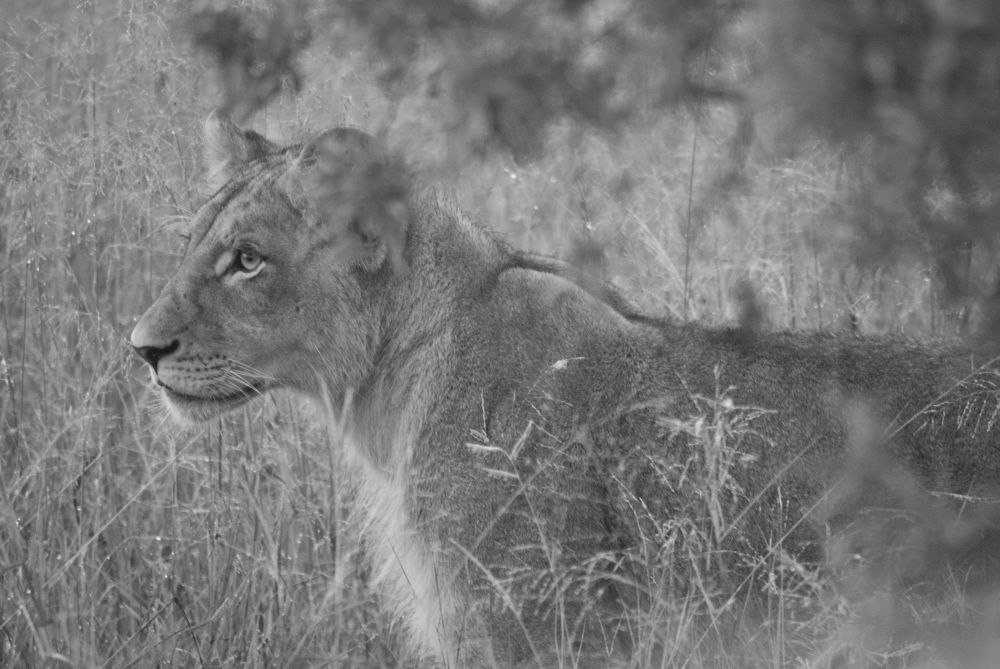 early morning cub by Cameron Smuts