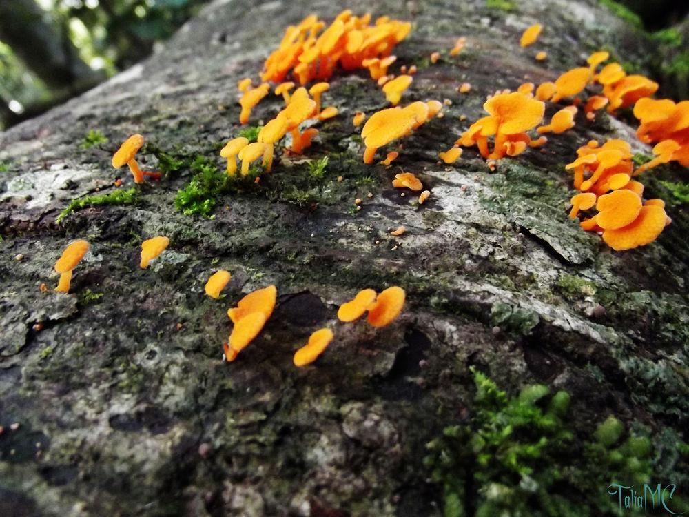 Orange Fungi by TaliaMC