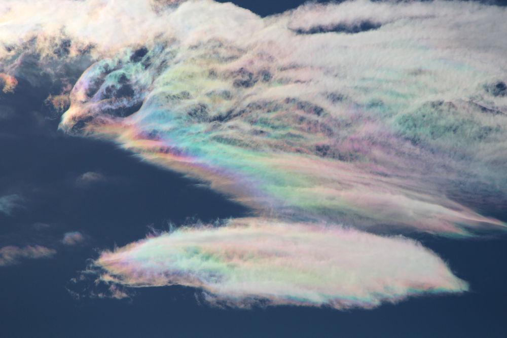 Clouds (Rainbow Bird) by Tracy Jones