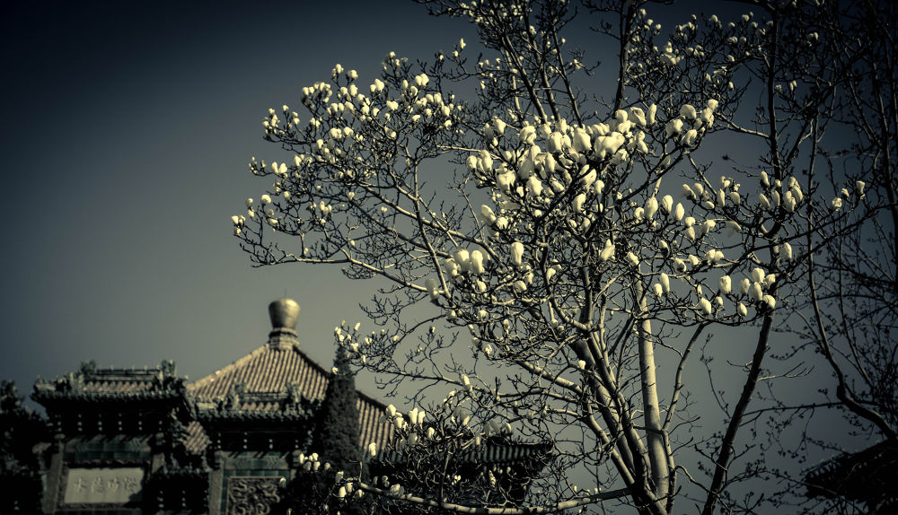 IMG_1824.jpg by qianfang