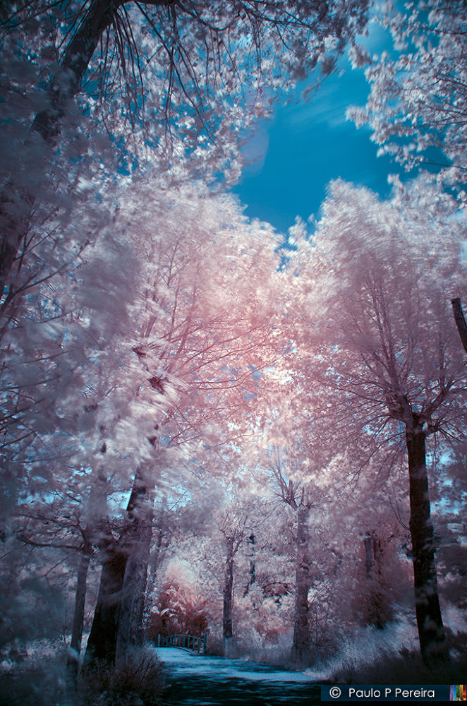 Awen Gates | Infrared photography by Paulo P. Pereira