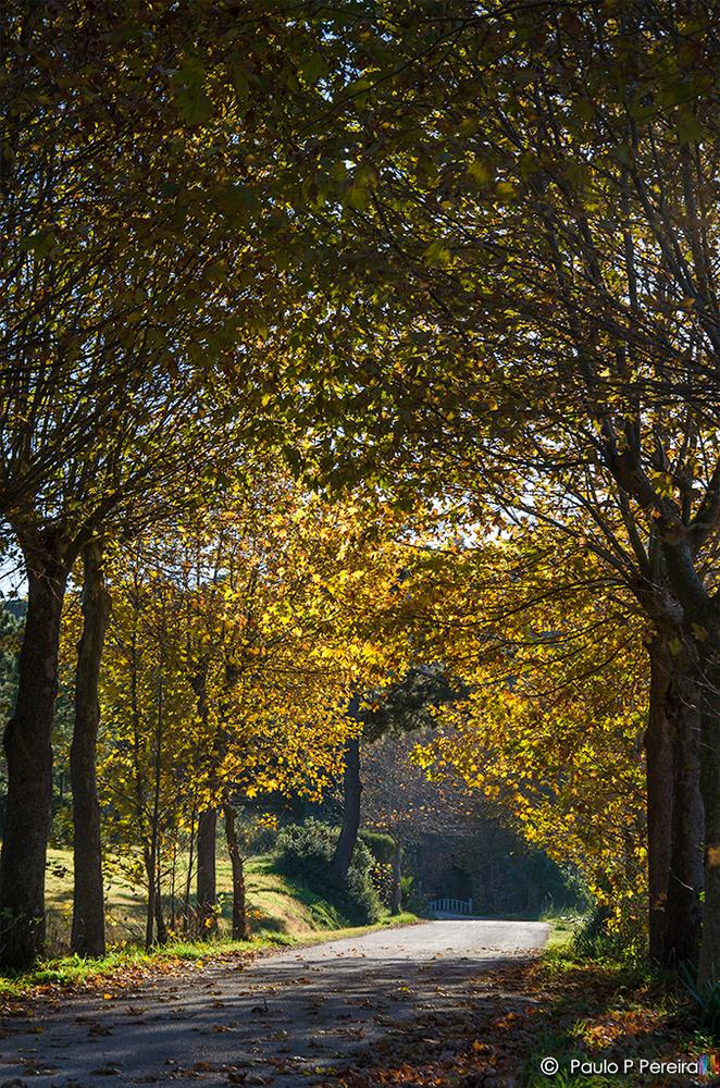 Autumn by Paulo P. Pereira