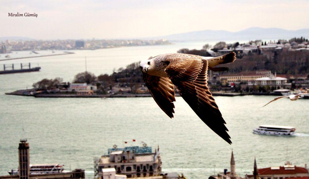 İstanbul / Turkey by miralimgumus