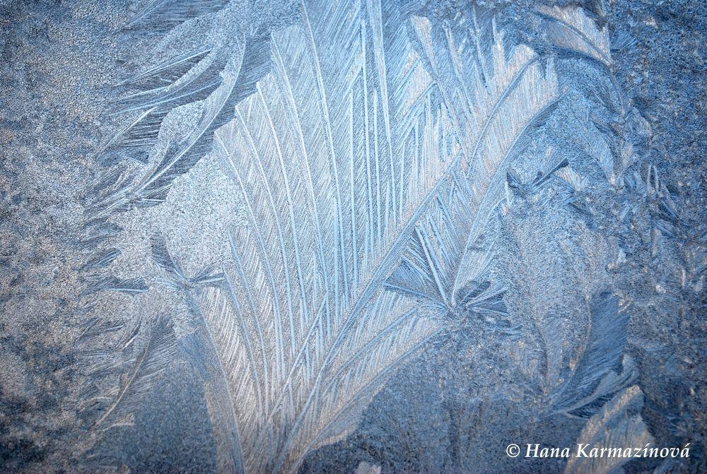 frost on window by hancule83