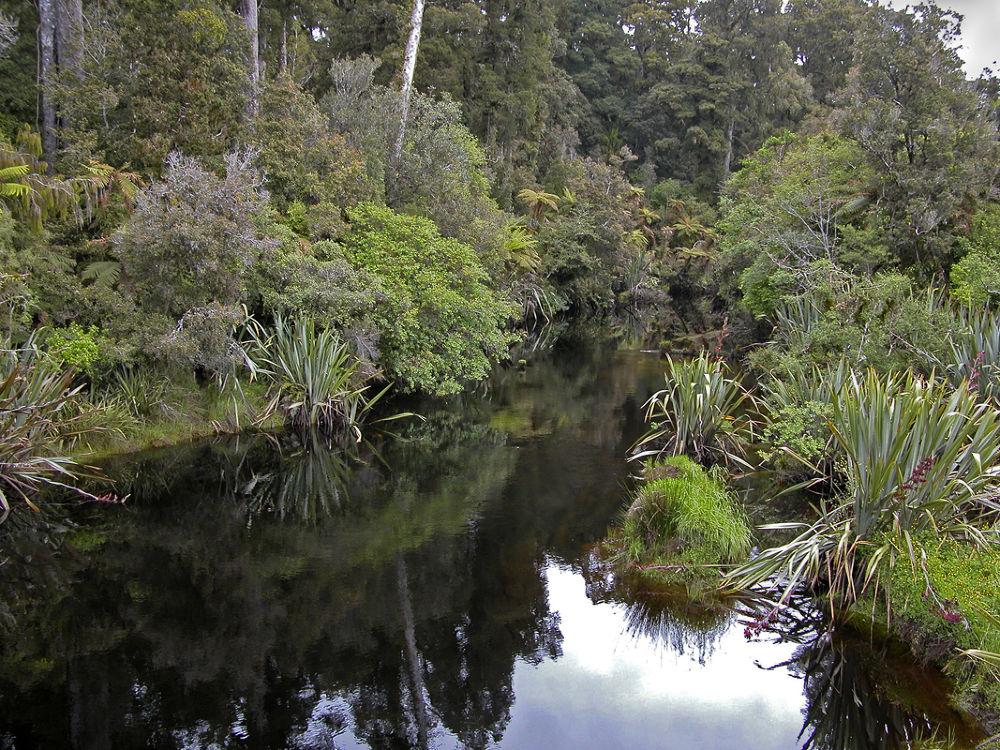 Native Forest, West Coast NZ by Lloyd Palmer Photography (LPics)