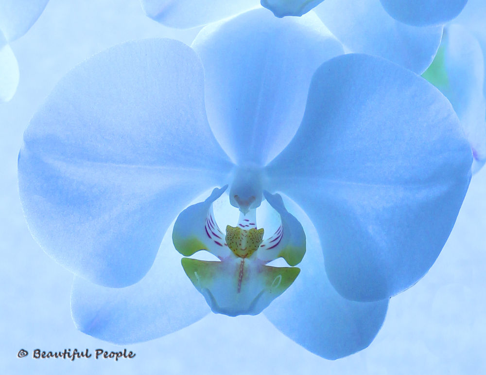 Orchid by Kevin Parry