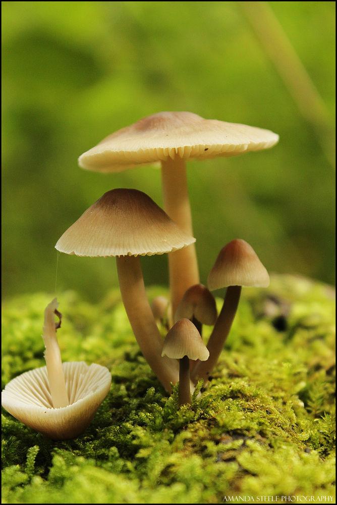 Mushrooms! by Amanda Louise Steele