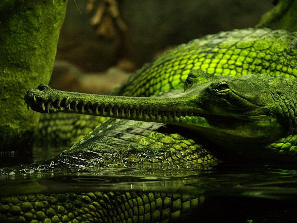Reptile  by Dana Cristea