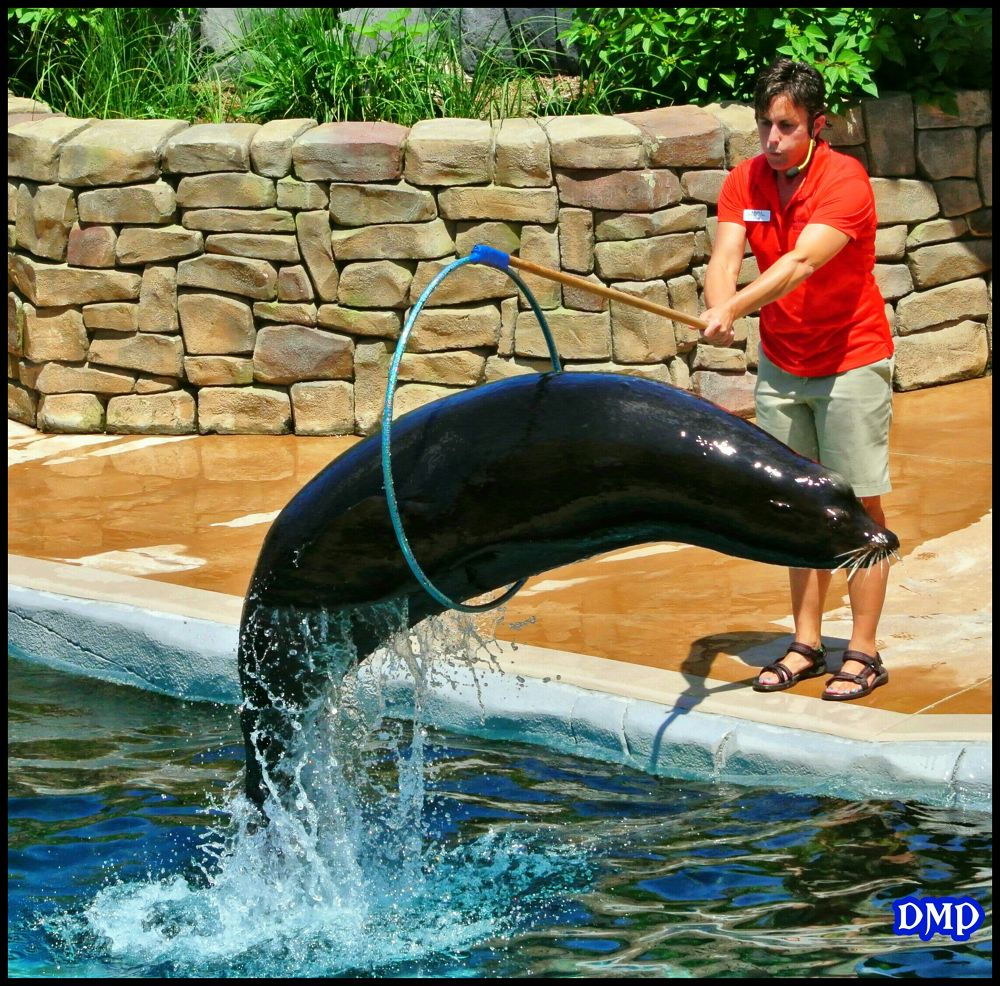 SEA LION SHOW by DefiningMomentsPhotography