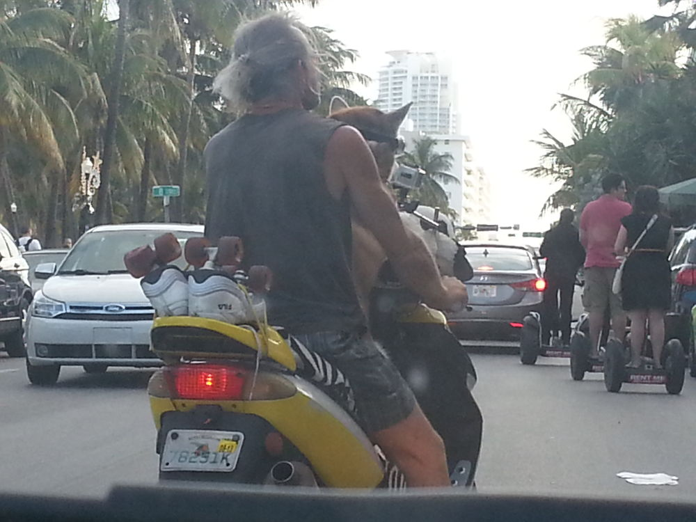 A Man and his Dog Ride - www.whatyagotmiami.comdogs by WhatYaGotMiami