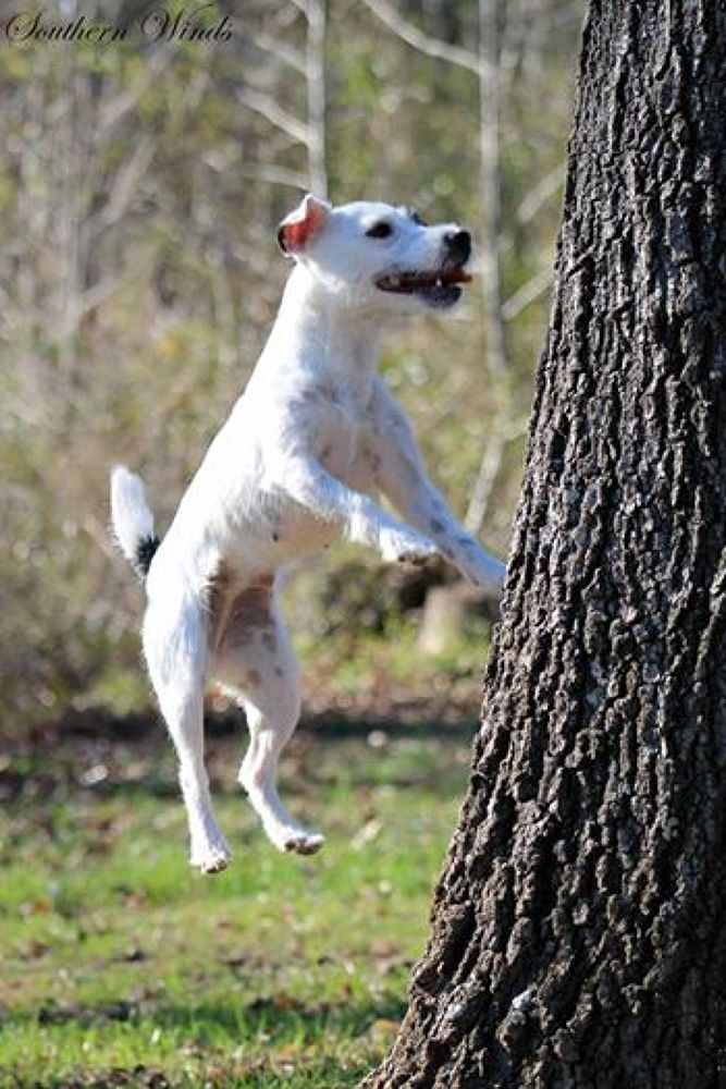 White dogs can Jump by Michele Deadwyler