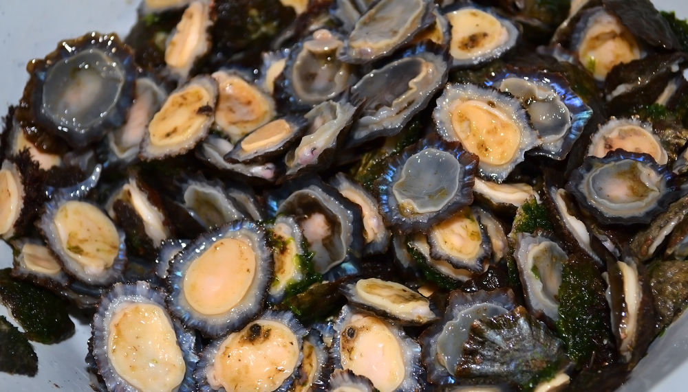 Limpets - fresh from the sea by FotoMadeira