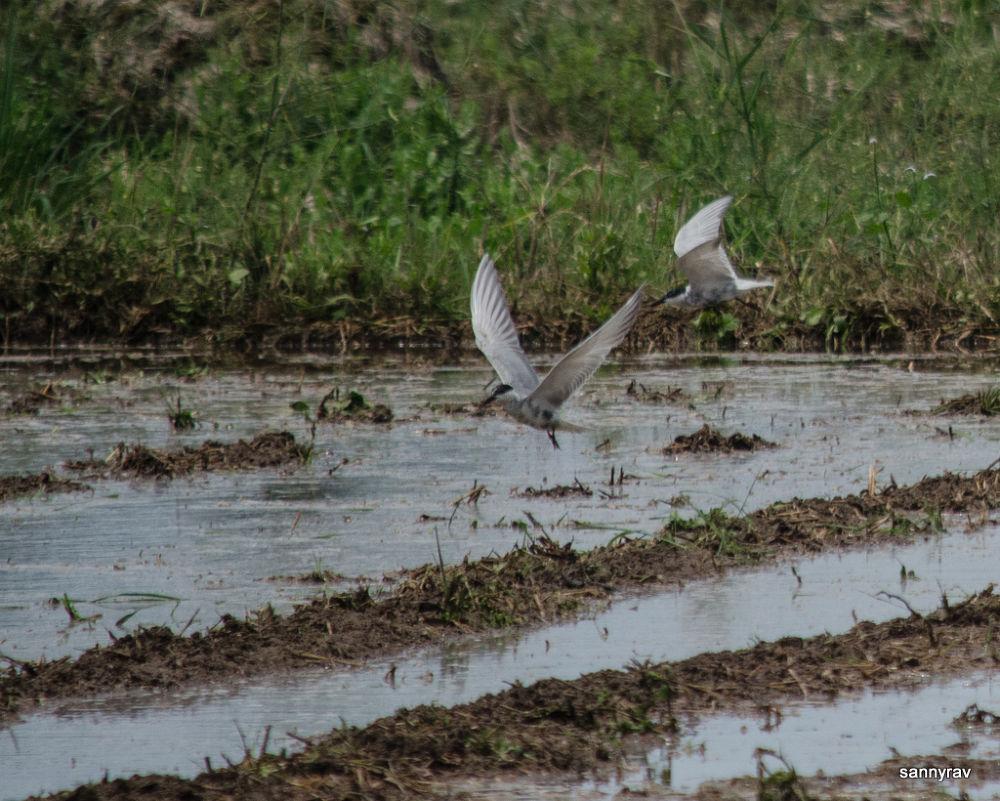 birds feeding by sannyrav