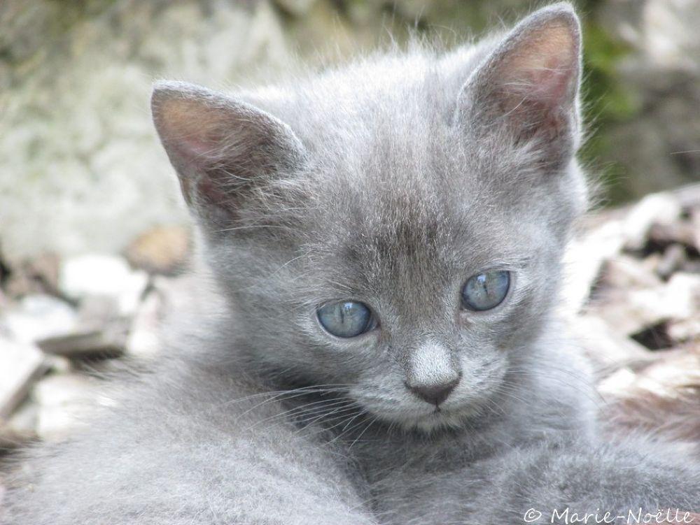 Photo in Random #kitten #chat #animal