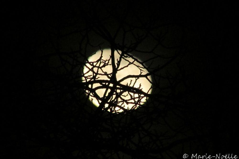 lune à travers des branches by MarieNoelle