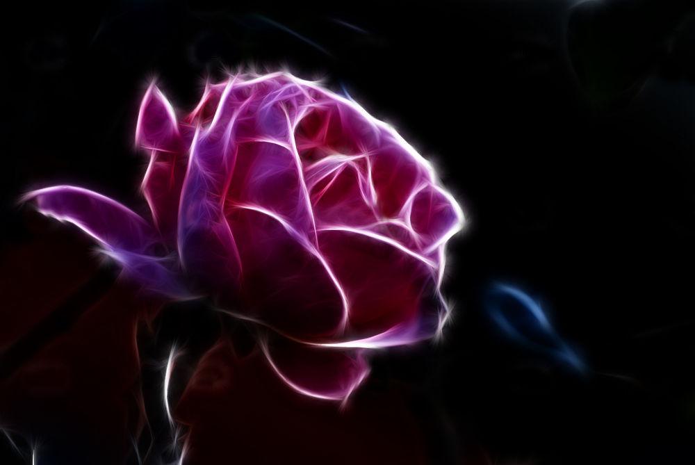 Flower by Carmelo Mazzaglia