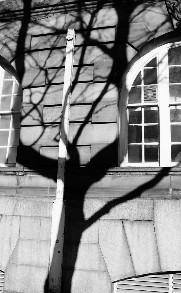 tree shadow  by Andrea Kershing Anstey