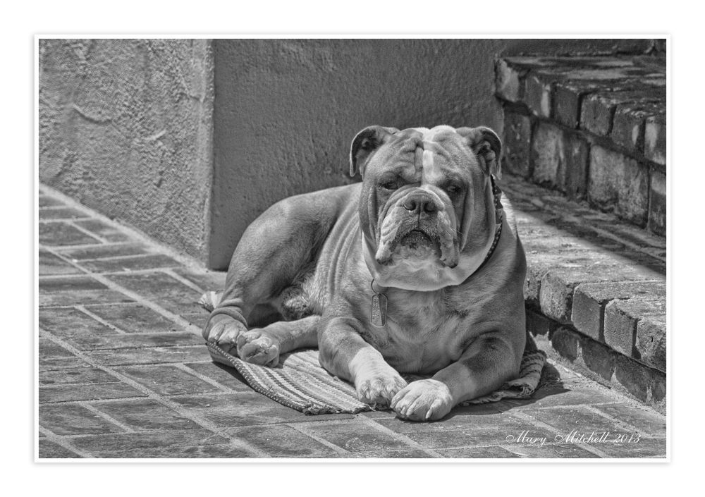 Keeper of the steps B-W.jpg by Mary Mitchell