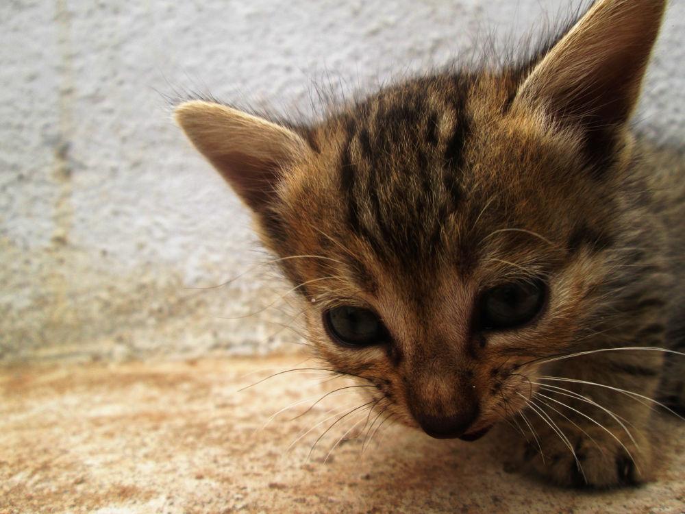 cat by Hari Prasath
