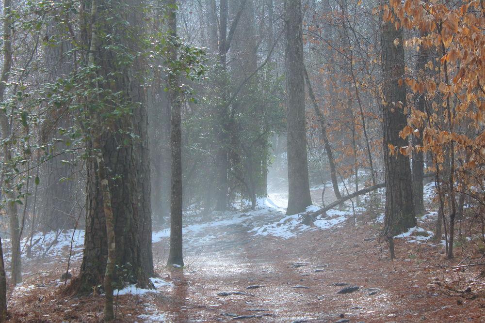 foggy trail by Mindy Buol