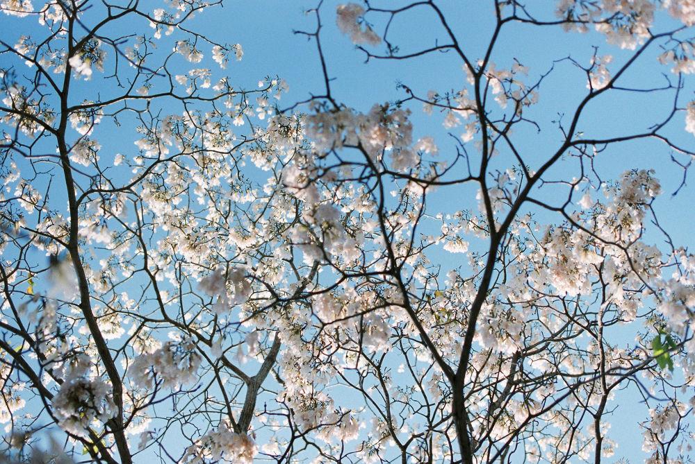 Langkawi's Spring by Dickson Chong