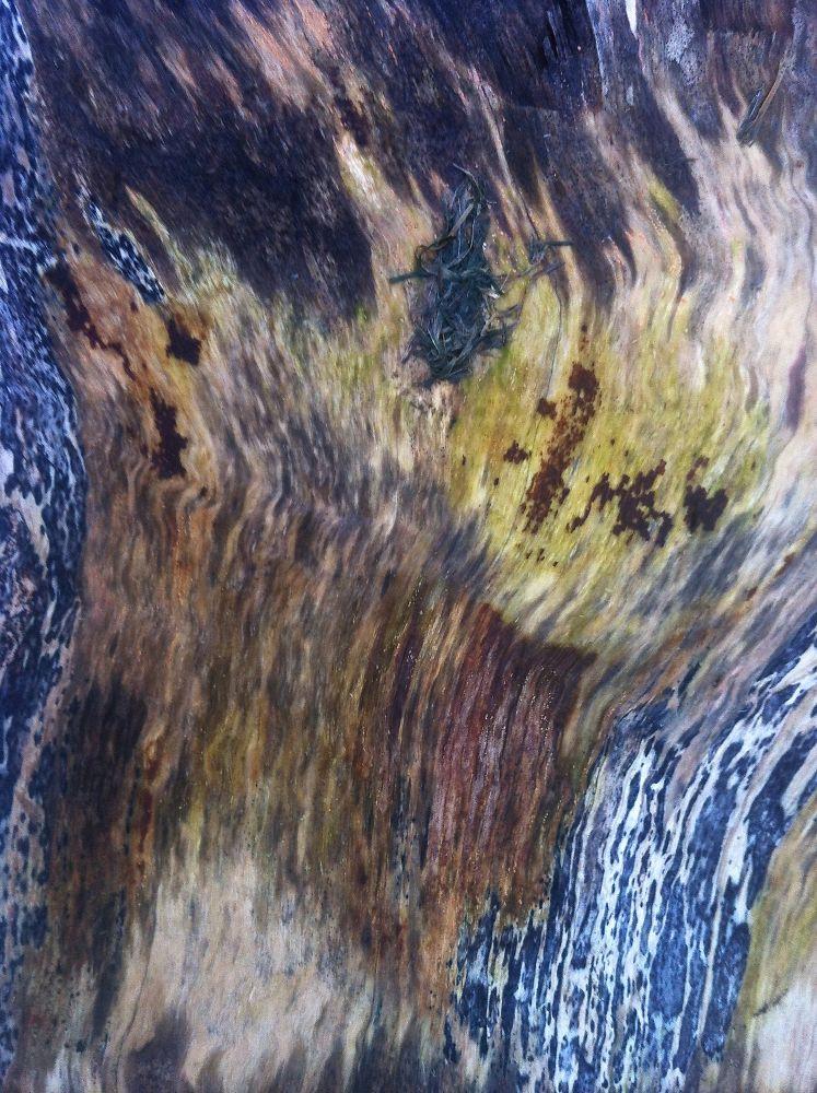 Wood landscape 3 by Chris Poupazis