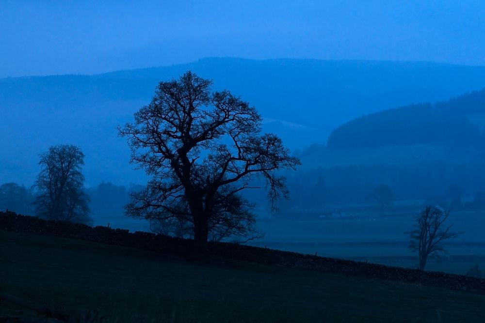 Branches at Dawn_0018 by GrahamJRiddell