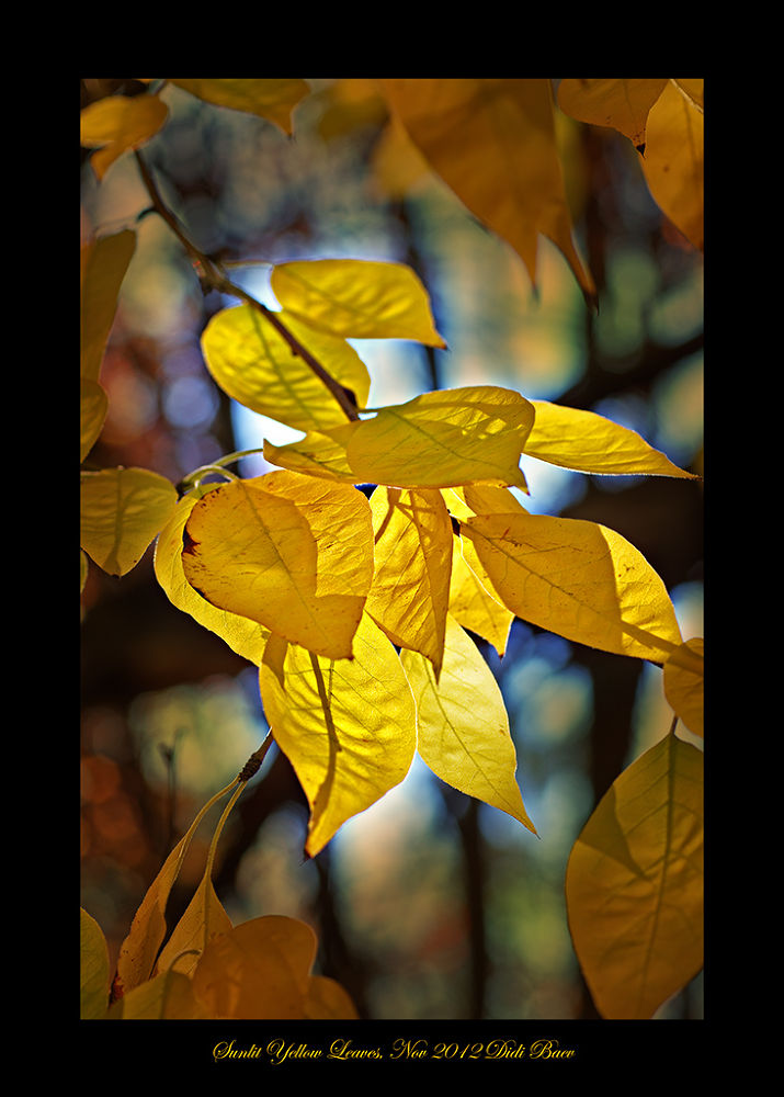 Sunlit Yellow Leaves by didibaev