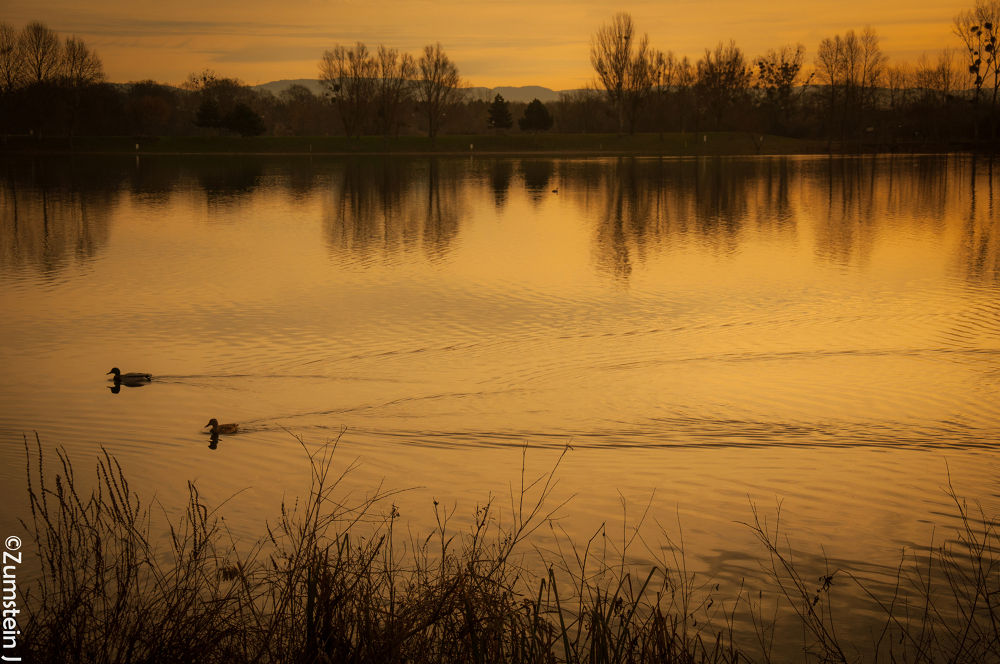 morning light 03 by Zumstein Jacqui