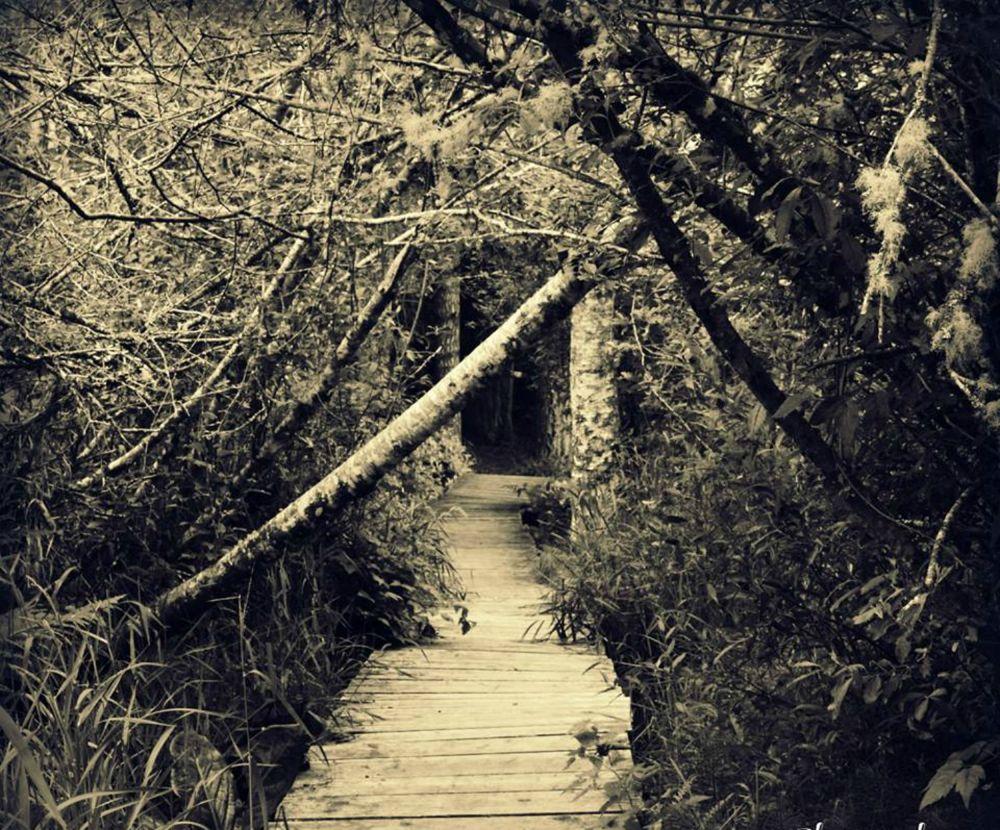 Trail by Michelle Farmer